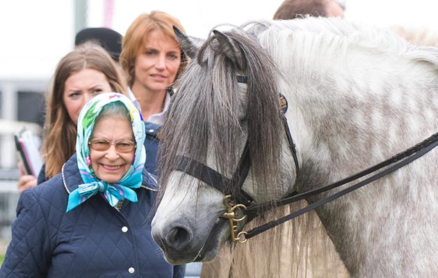 Queen Elizabeth ll attends the Royal Windsor Horse Show on May 12, 2018. This is the Queen's highland stallion Balmoral Mandarin who was third in the Olympia large breeds with Mathew Lawrence riding. He was also 1st and reserve in the highland in-hand section the previous day with his producer Lizzie Briant.