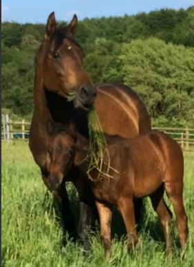Horses and ponies for sale under £1,000 - Horse & Hound