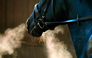 winter coughing horse