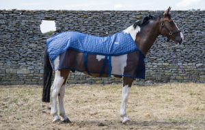 Best horse cooler rugs and wicking rugs