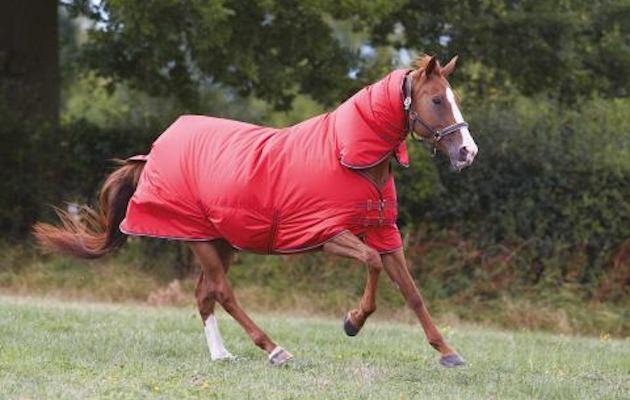 Aldi Returns With Bargain Equestrian Range Horse Amp Hound