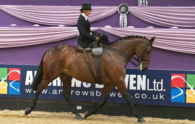 How to ride side-saddle Jayne Ross riding Time 2 Reflect to win the ladies side saddle championship at Horse of The Year Show 2018.