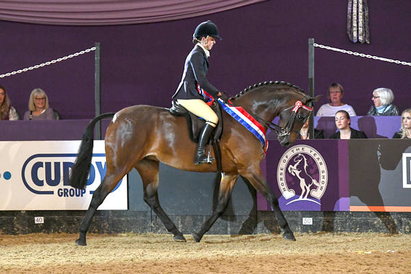 CARMENS NOVELLO for owner Charlotte Read, winner of the Rockleigh School Supreme Pony of the Year Championship at the Horse of The Year Show 2018 at the NEC near Birmingham in the UK between 2nd- 7th October 2018