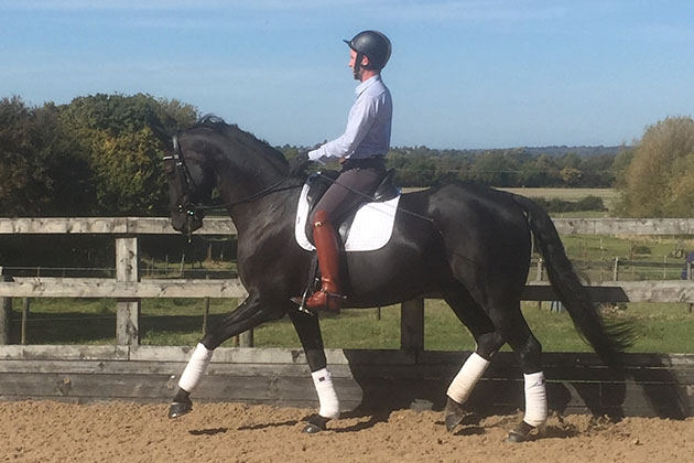 Shaun Mandy's dressage blog: goodbye — I leave you in a happy place and excited about my future