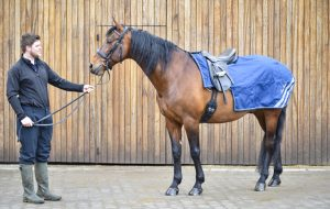Best Exercise Sheets For Horses 2018 Mark Todd Waterproof Sheet Review