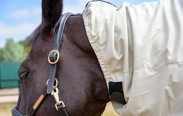 Snuggy Hoods Bug Body Fly Rug Review Horse Hound