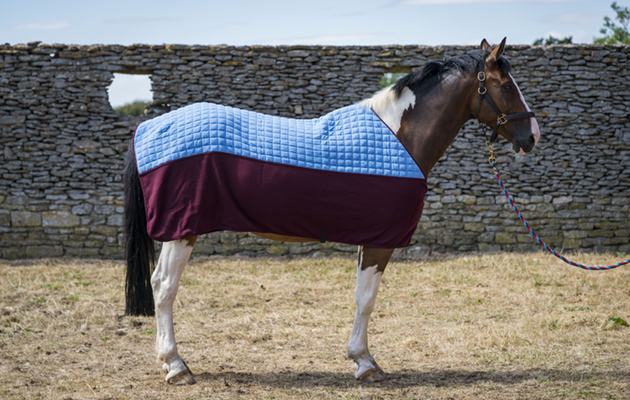 Thermatex Duet Cooler Rug Review