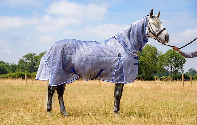 Weatherbeeta Comfitec Ripshield Plus Fly Rug Review Horse Hound