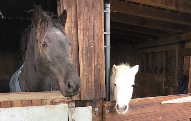 Owner S Call For Change After Firework Lands By Stable