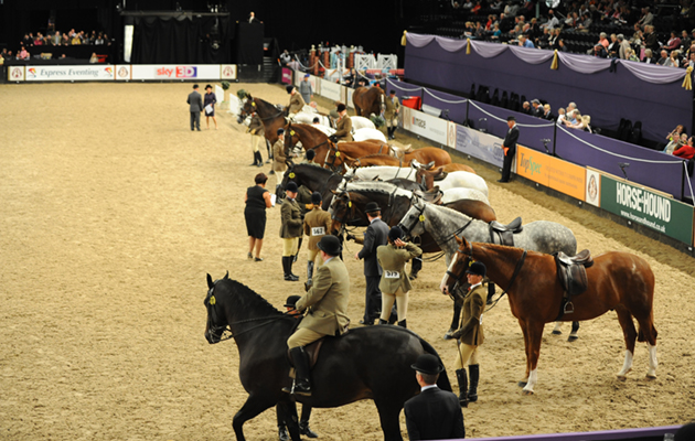 HOYS Day 2 05.10.11 H/W Hunters GV