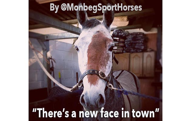 1 horse encounters 750 cows and 7 other great bits of horsey social media this week