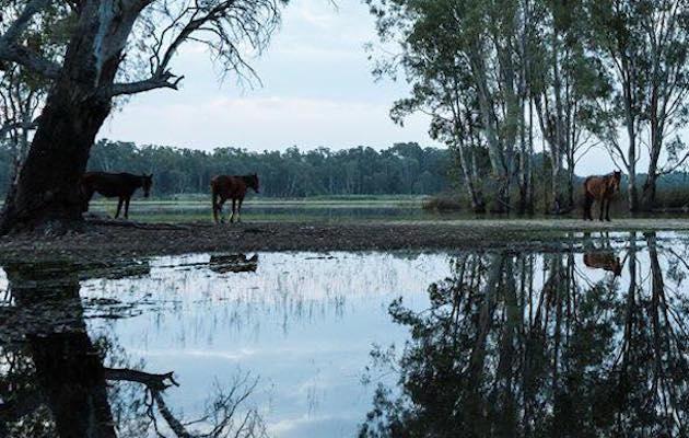 Horsey dating sites uk in Sydney