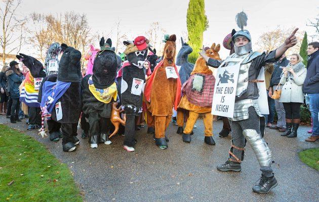 Goedkoop Badkamer Kruk : 30 horses to take to the streets in wacky annual race horse & hound