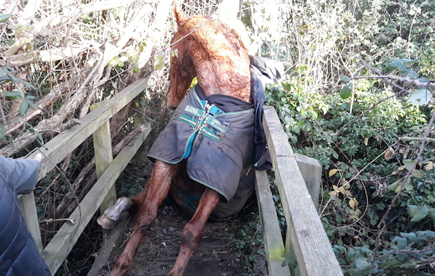 horse trapped bridge eton
