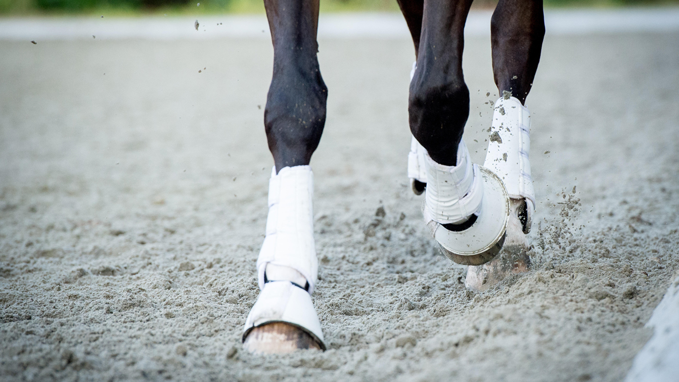 E7PCA8 Closeup of the hooves from a horse while in trot on an outside track