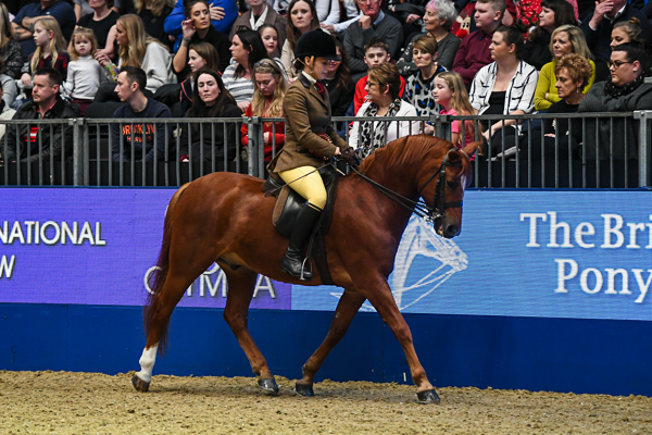 Meet the 12 best of breeds crowned at Olympia