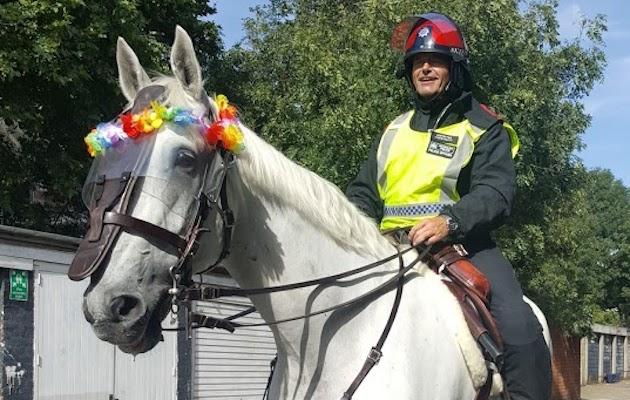 police horse keston
