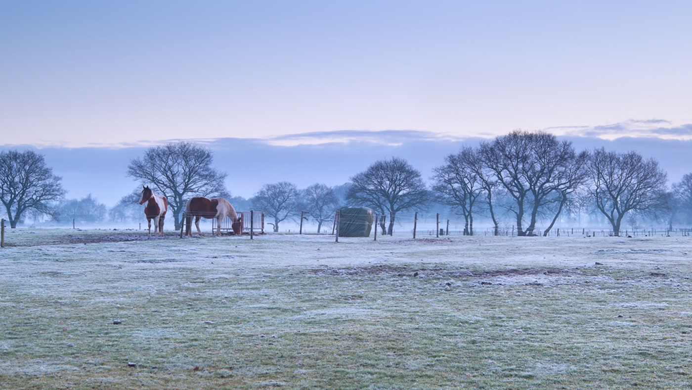 DXFBTW horses on frosty pasture during misty sunrise, Netherlands