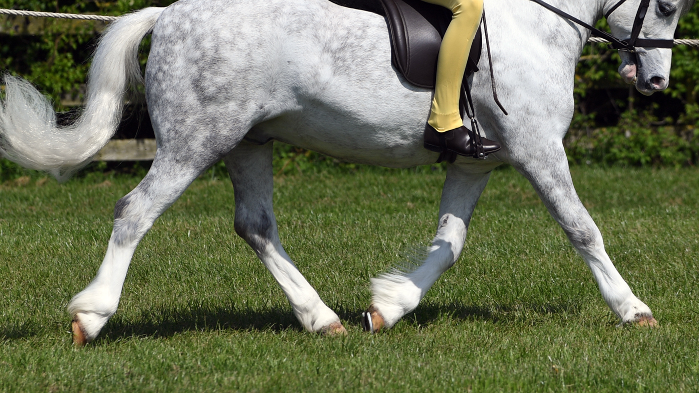 horse legs showing