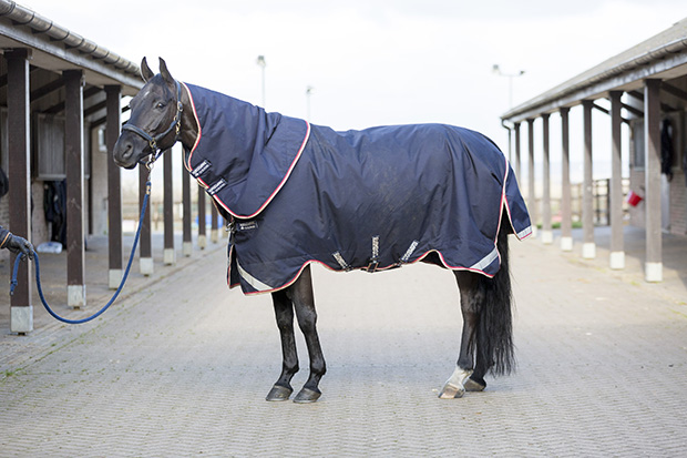 Horseware Rambo Bundle Duo Turnout Rugs Review Horse Hound