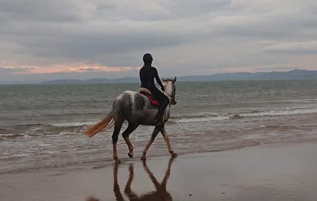 Owner tells of her terror as out-of-control dog chases horse into the sea