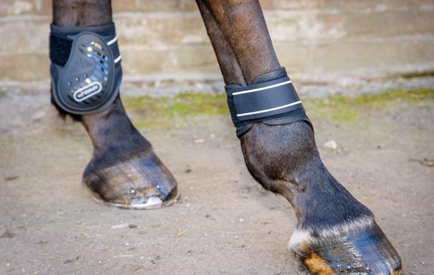 Whitaker Bingley Tendon/Fetlock boots