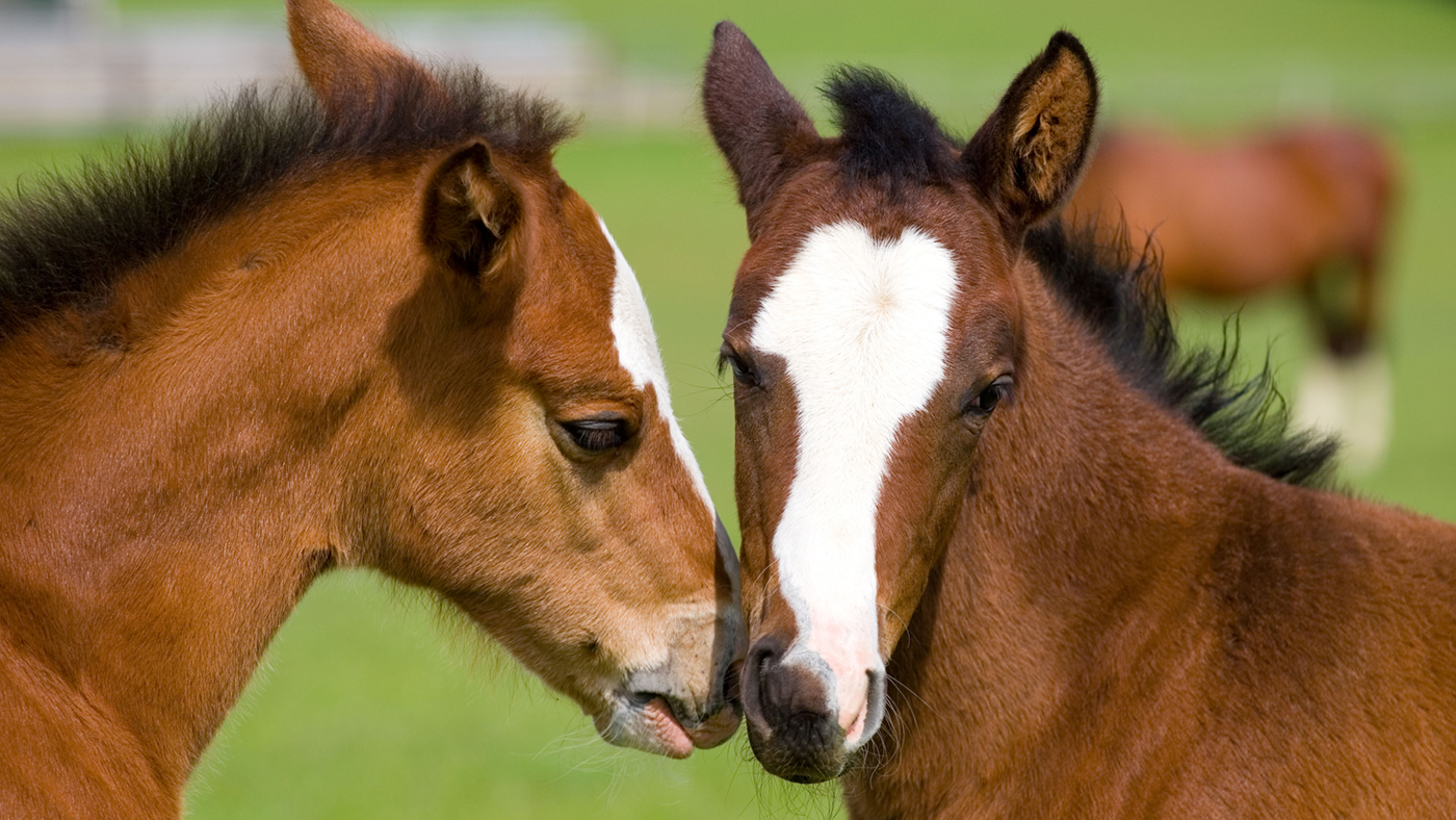 13 Very Cute Racehorse Foals Born This Year You Have To See Horse Hound