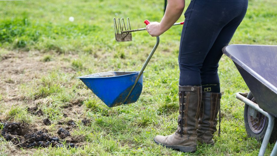 How often should you poo pick a horse's field?
