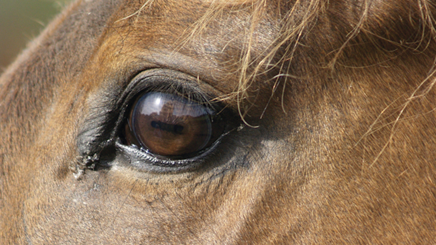 Calls for equine rescue licensing after 'sanctuary' welfare prosecution *H&H Plus* - Horse & Hound