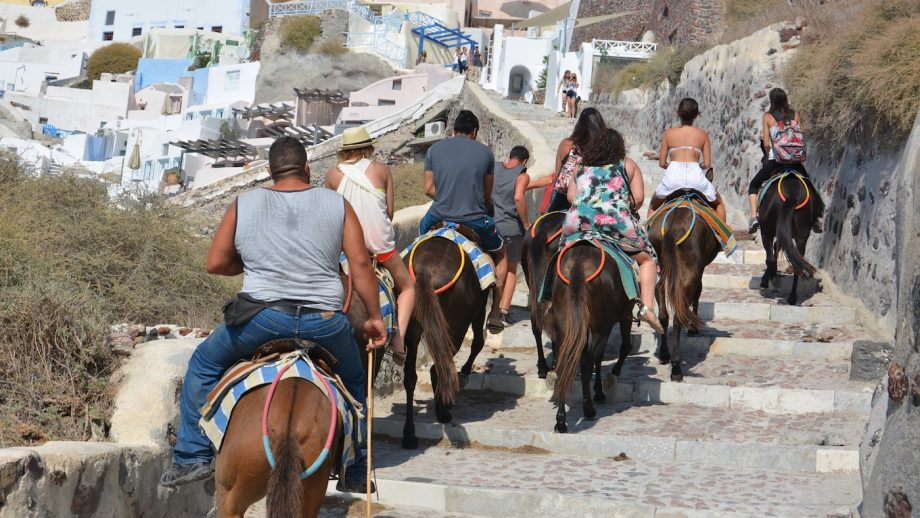 Outcry of donkeys carrying 'overweight' tourists prompts cruises to back campaign