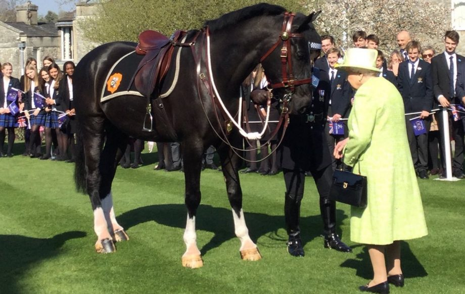 Queen names new police horse – and hands out carrots to top