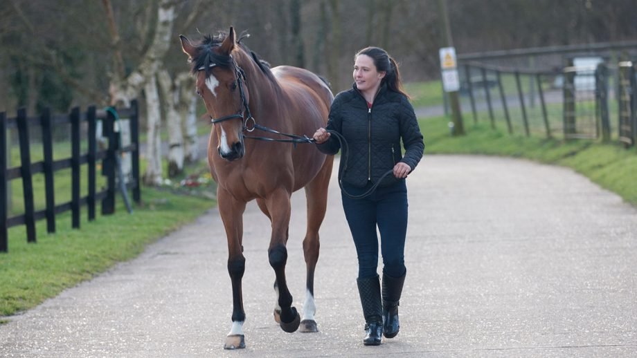 EH2TYE A young woman leading a Thoroughbred horse in hand