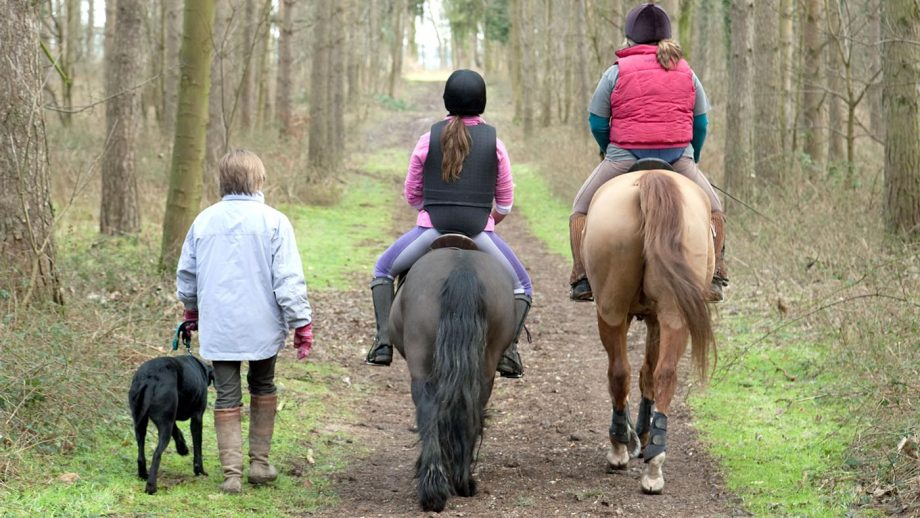 BH8NGE Horse riders and woman walking the dog, rear view, Thetford Forest, Norfolk, UK
