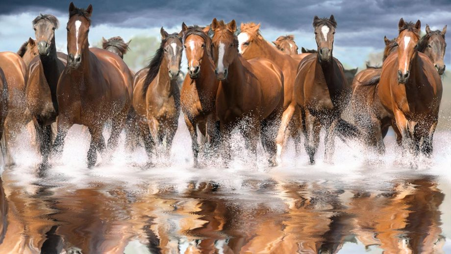 US government offers $1,000 to anyone who adopts a wild horse