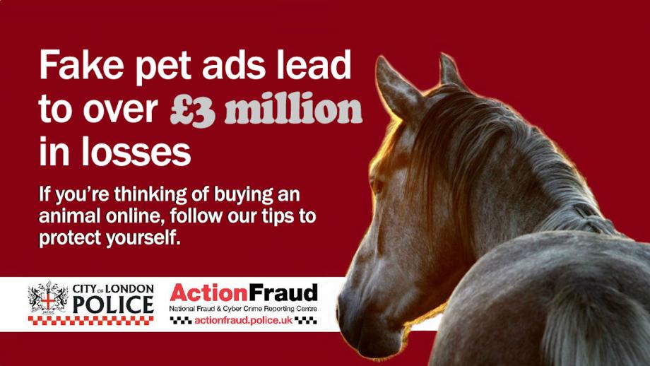 equestrian scam