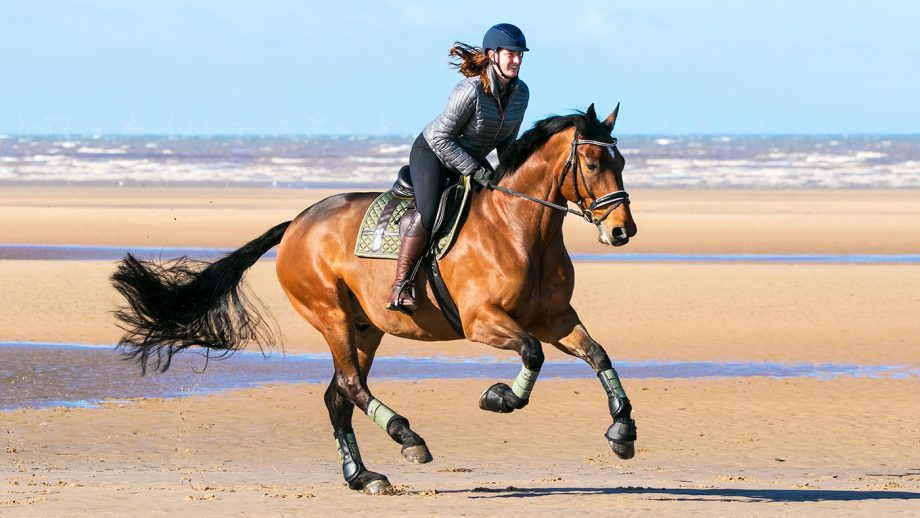 Horses for sale: Horse Rider on Beach. 21 year old Courtney Monks rides her beloved 7 year old Cleveland Bay 'Cedric' through the sea waters along the golden shores of Southport Beach in Merseyside