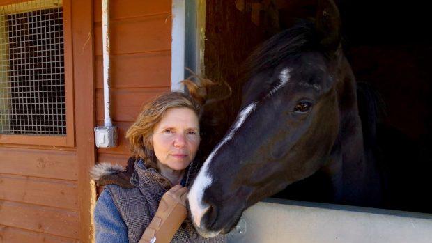 Dog attacks - Horse & Hound