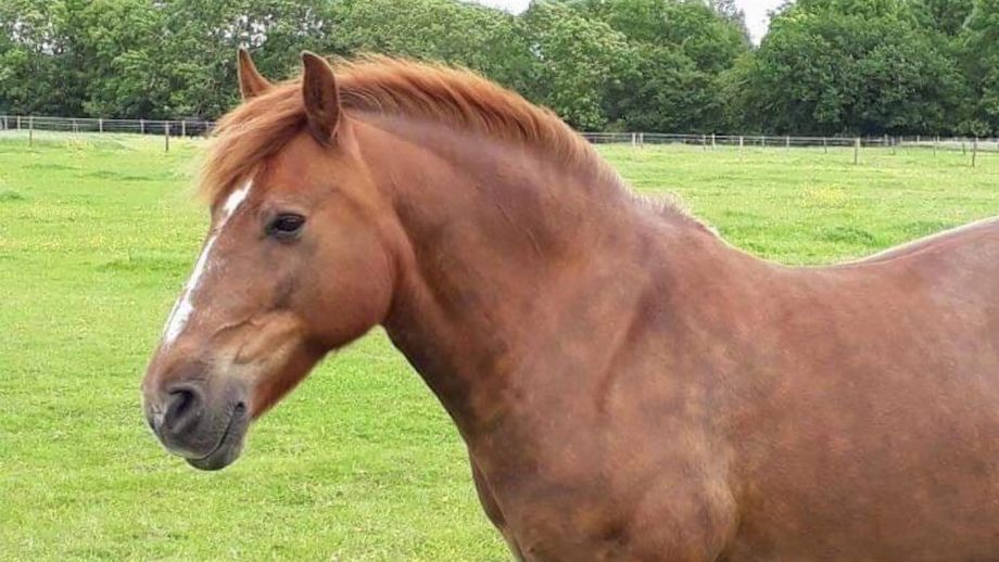 Owner reunited with horse she saved from meat man 22 years later