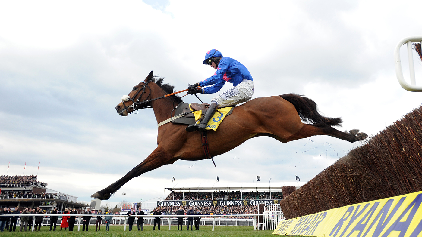 Watch Cue Card work at home during his retraining for the show ring