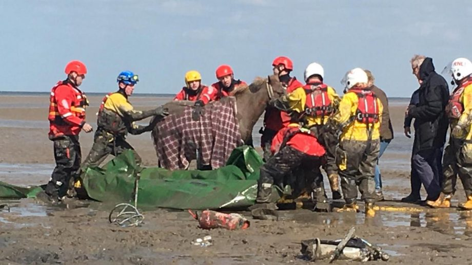 Exhausted horse freed from belly-deep mud in 'rare and complex' rescue