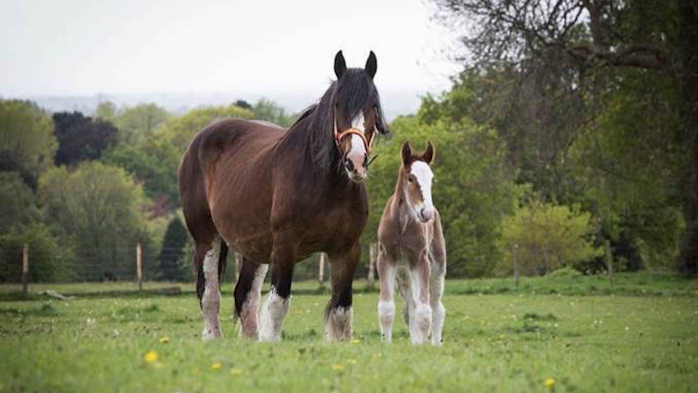 Hello World Gorgeous New Foal Gives Rare Breed A Boost Horse Hound