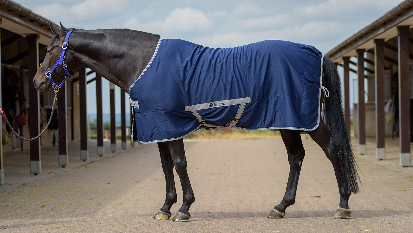 Best Summer Sheets 2019 Horse Hound S Tester Ranks Her