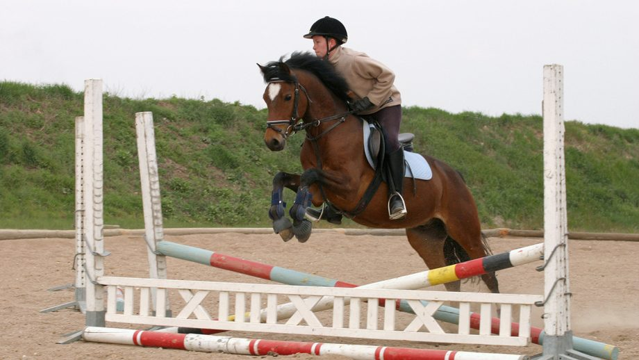CXH6WK showjumping training