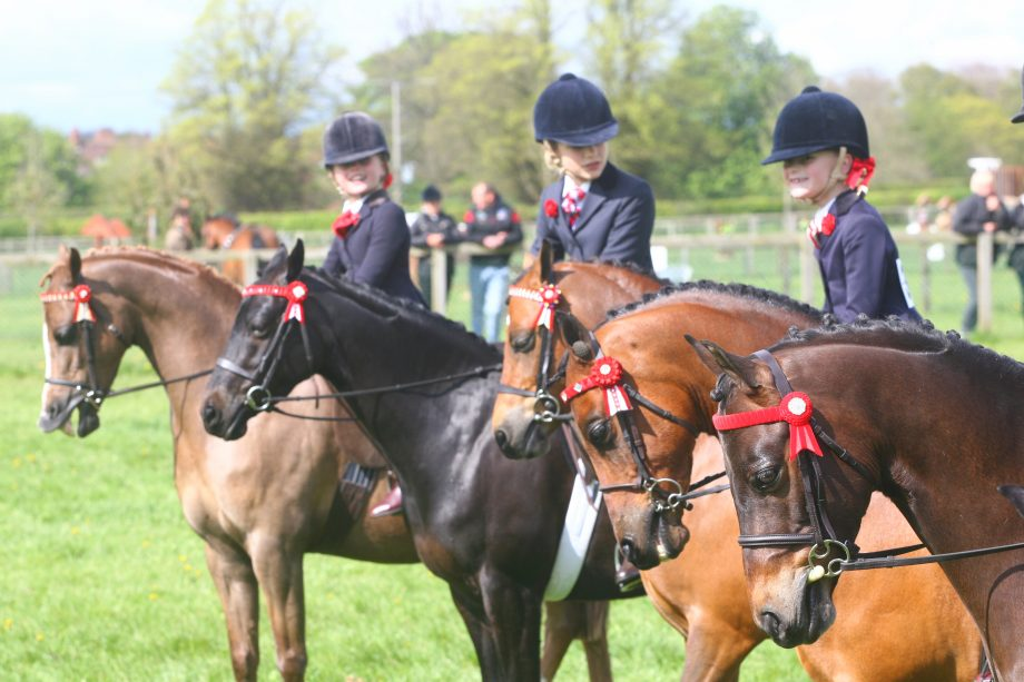 Ponies UK South Spring Show, 5th May 2012, General Views of Pony line up