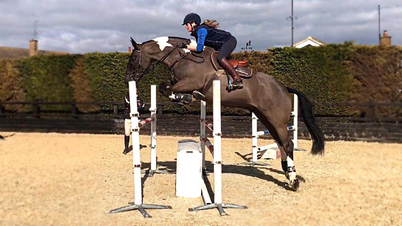 Thiscobcan 22 Cobs That Break The Mould Horse Hound