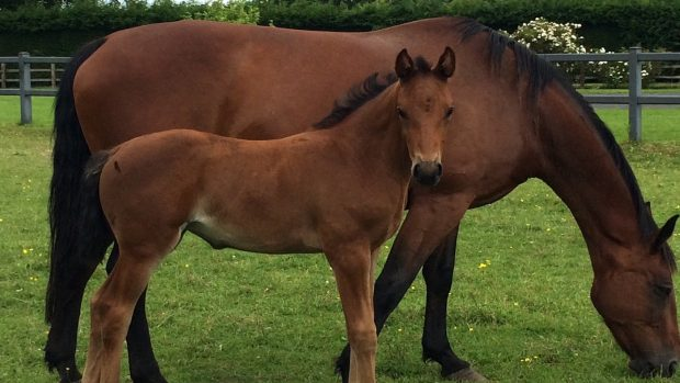 e9372c4cc519be Mare and foal die after vet 'held up by cycle race steward'