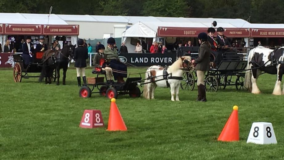 Pumpkin and Harley — the smallest competitors by far — take Royal Windsor by storm