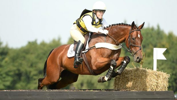 Wonderful warmbloods that will make you say wow (and want to own them too)