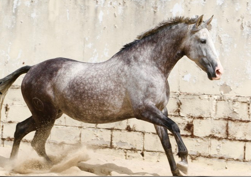 5 broodmares that could boost your breeding programme