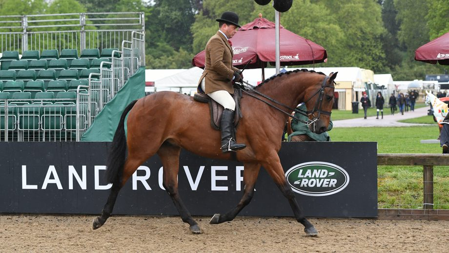 how to prepare your horse for a ride judge Somerville Lad, owned by Jill Day and exhibited by Mr Robert Walker, winners of the Novice Hunter Championship during the Royal Windsor Horse Show held in the private grounds of Windsor Castle in Berkshire in the UK between on 8th-12th May 2019